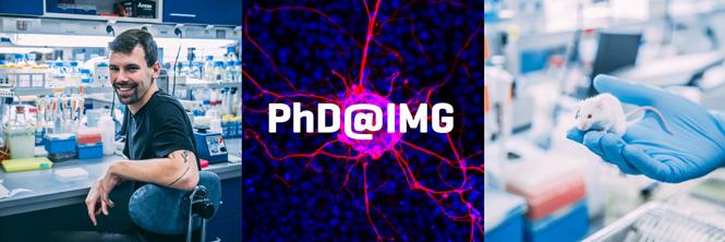 PhD @ IMG